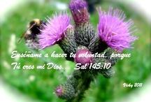 Psalms/Salmos 126-150 / by Vicky Pratt