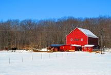 Country Chic / by Adrienne Smith