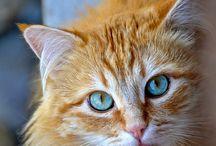 ~Orange Cats~ / by ~ BJ ~