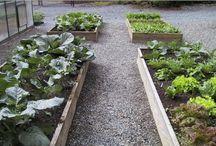 Horticulture / by Sara Vandenbos