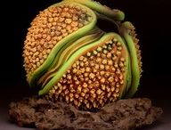 FRUITS, PODS, SEEDS, AND POLLEN / by Claudio Sgaravizzi