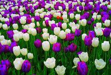 Blooming Spring / by Noellen