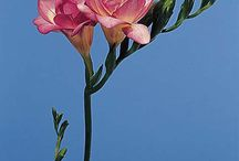 *Wedding Flowers / by Christi Chidester