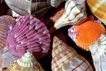 Sea Shells and Star Fish / by Terri McManus