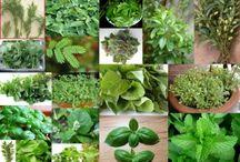 Herbal Garden / by Bergamot Body