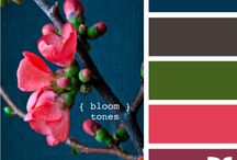 Color Palettes / by Megan Smith