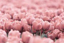 Pink / by Debra Henson