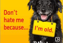 <3 Old Dogs<3 / by Clara Sears