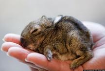 Pocket bunny / by Adeline Vasilev