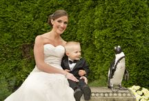 Animals in Weddings or Proposals! / by Long Island Aquarium & Exhibition Center