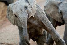 elephants / by Barbara Richards