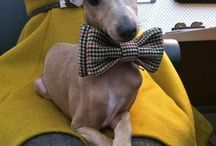 My Eyes Love Bow Ties / there's just something about a man in a bow tie. gets me every time. / by Abigail Harr