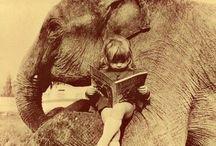 I <3 Elephants / by Mayra Aviña