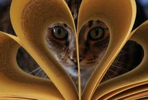 Books and Cats / by Darcy Pattison