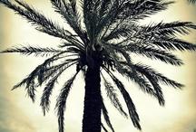 Ode to Trees / andreabalt.com  / by Andrea Balt