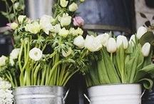 Flowers / by Paula Garcia