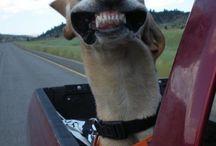 Funny Dogs / by The Joke Yard