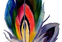 Feathers / by Rae Pare
