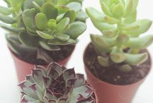 Succulents / by Margeaux