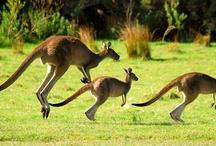 Australian Wildlife / by World Animal Protection Australia