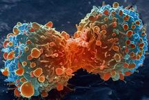 Cancer & Alternative Therapies / by Karin Corea-Laurel