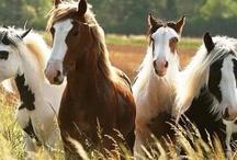 Horses / My childhood dream... / by Angelique Tisserand