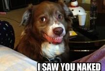 Dog Humor / by Jamie R