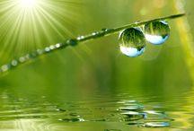 Gotas d'agua / Lindas gotículas. De chuva ou de orvalho são lindas demais. / by Véra Kartsch