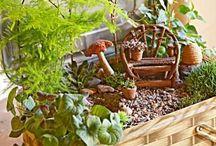 Fairy Garden. Sweet Magic.  / by Shawnelle Alley