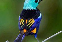 Beautiful Birds / by Tracy Elliott
