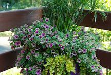 Container Gardening ...🌿...🌿...🌿 / by Debbie Presson