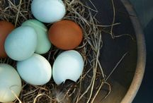 fresh eggs / What the egg calls the end, the rest of the world calls a chicken / by Marianne Koning