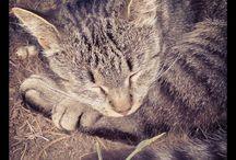 Cats, kitties, felines / by Eclectic Odds n sods