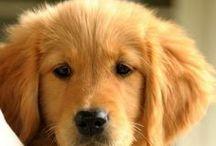 Cute pups / by Molly Beatty