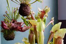 plants/gardening / by Bev Garretson