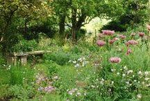 My Garden   / by Bibi Berki