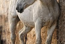 Horses / by Izzy Cornett