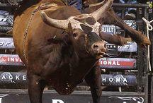 Bull Riding / by Sharon Lumpkin