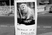 Funny Signs / by Mattie Babb