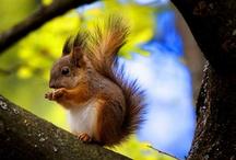 Squirrels / by Teena White