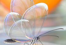 Butterfly love / by Stephanie Dorron