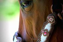 Horse tack / by Samantha Hubert