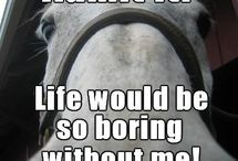 Horse / Horse pics and quotes.  / by Jodie Hendricks