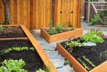 Home Gardening / Home Gardening / by Market27