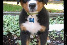 I need a puppy  / by Andrea M. Herron