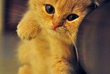 Animals / by Lori Ilse