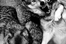 Wild / by James Haeussler