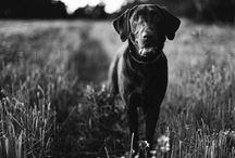 Dogs are a girls best friend / by Alexis Bryce