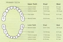 Dental Stuff! / by Ashley B