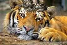 Cute animals / by Roxy